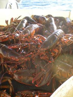 Lobster Trap War in Friendship Maine?