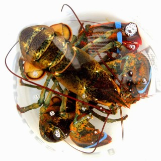 Best Places to Buy Maine Lobster Online