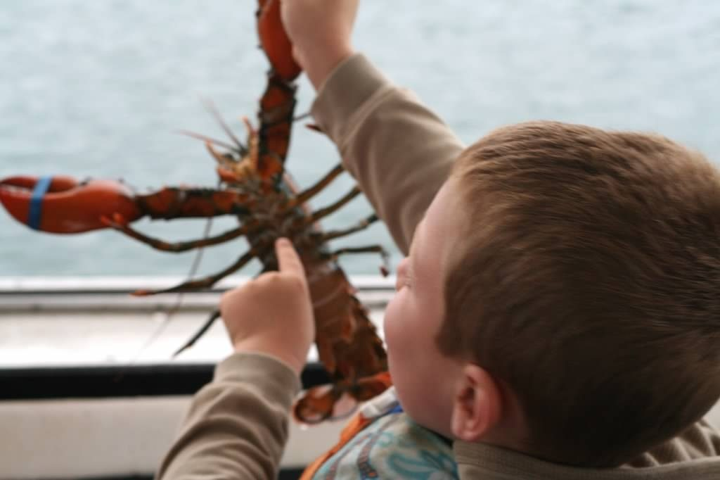 Five Fun Facts About Lobster