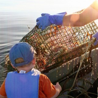 Hauling Maine lobster trap