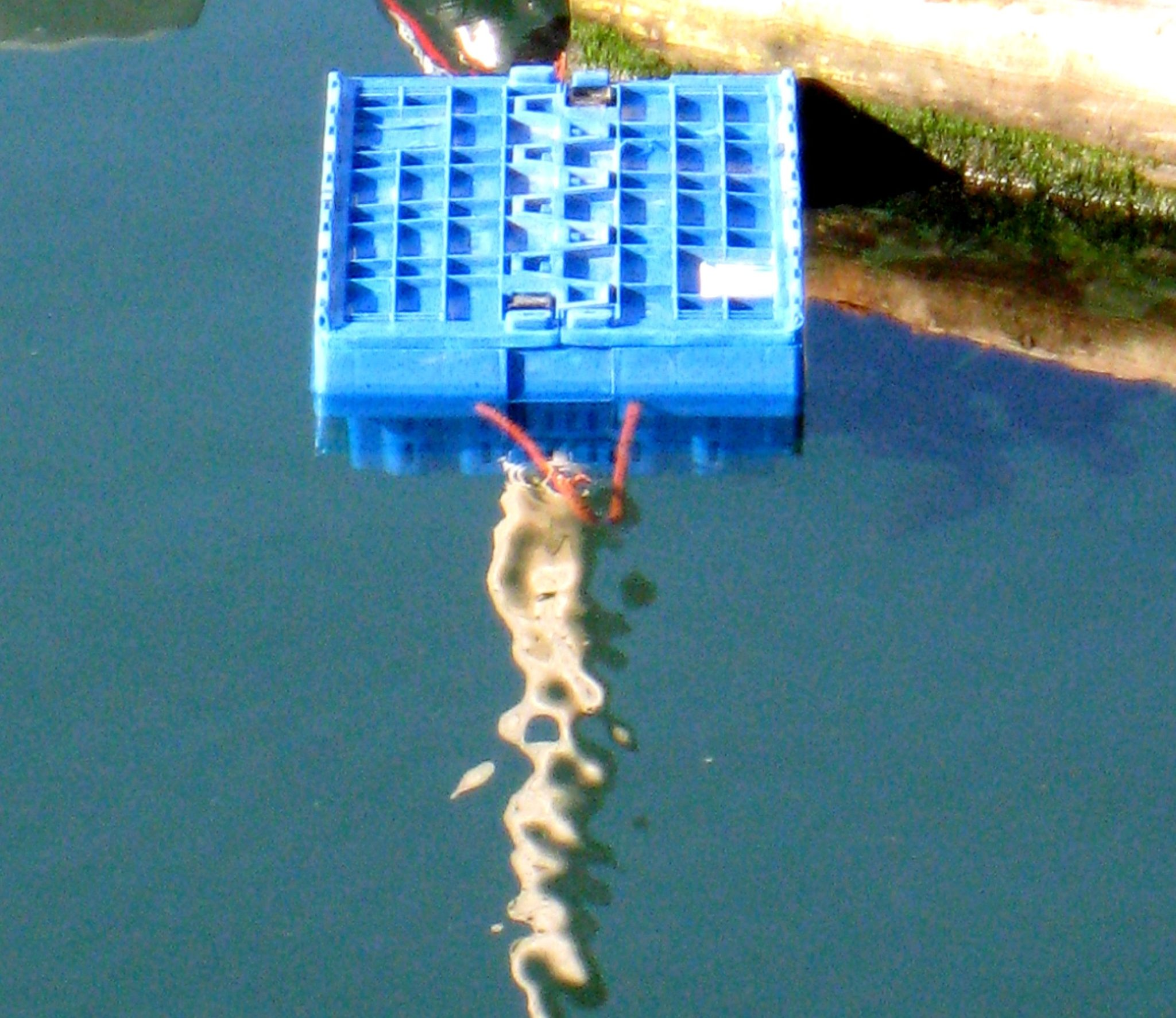 Lobster Crate in Water