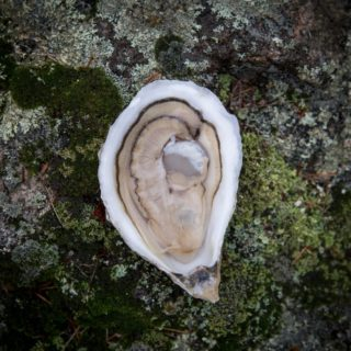 Damariscotta Oyster Celebration Schedule