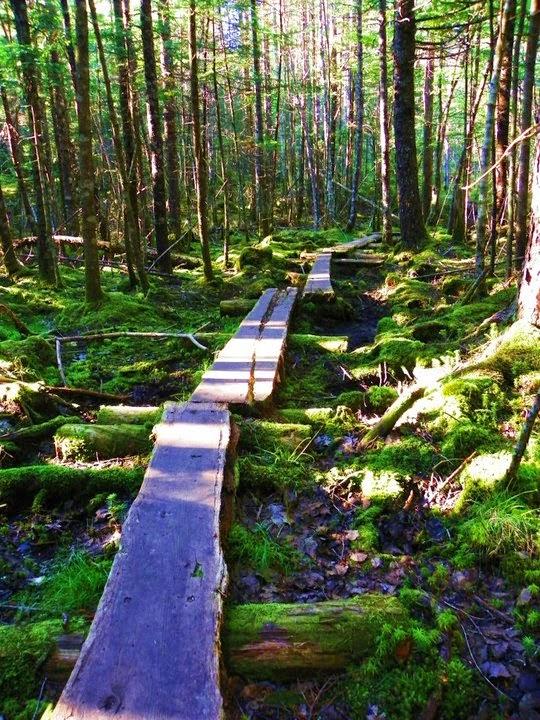 Cutler's Bold Coast Trail