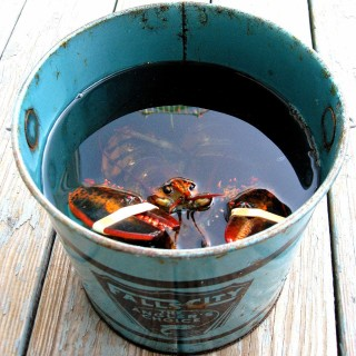 Live lobster in a bucket