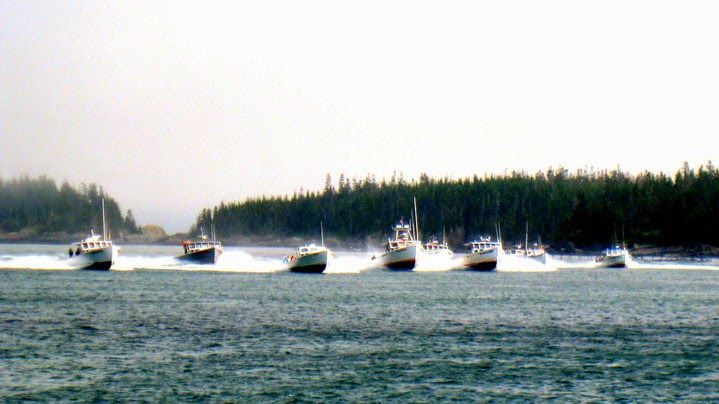maine lobster boat races