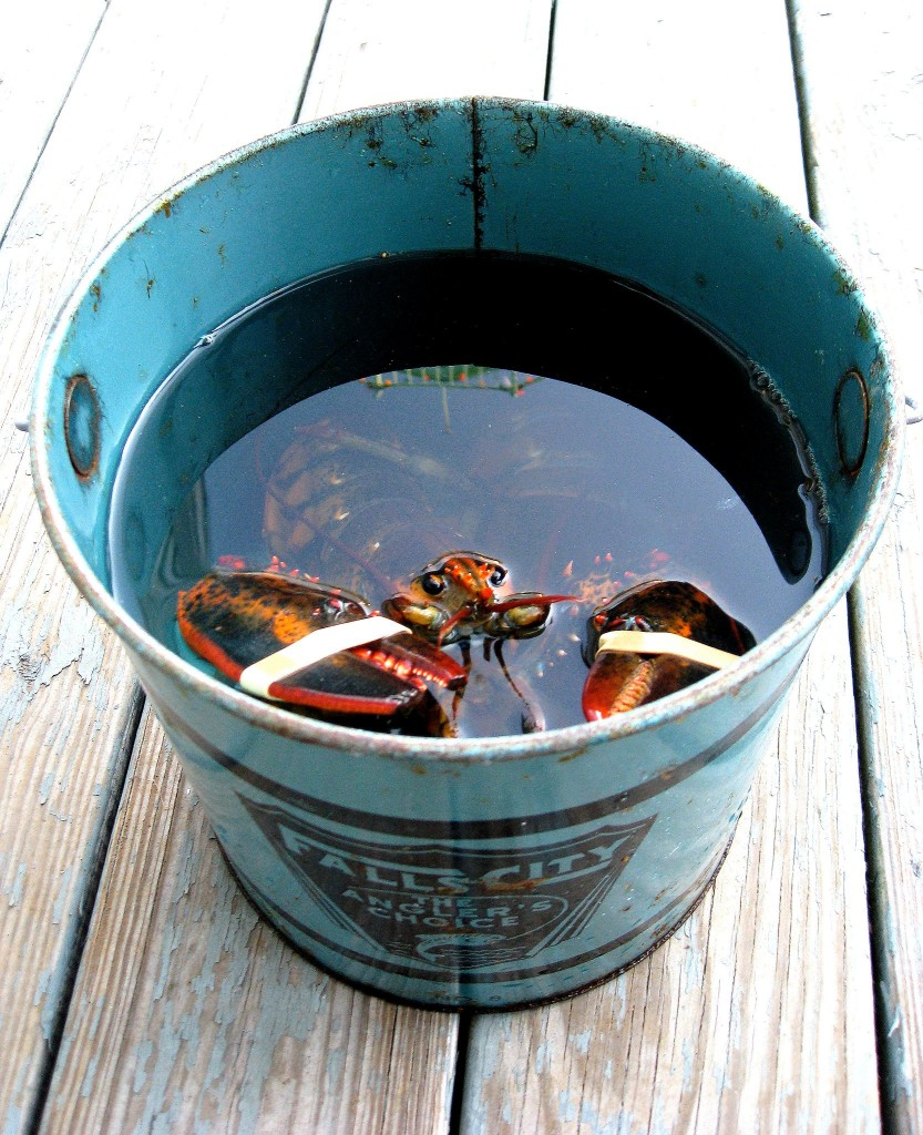 fresh maine lobster