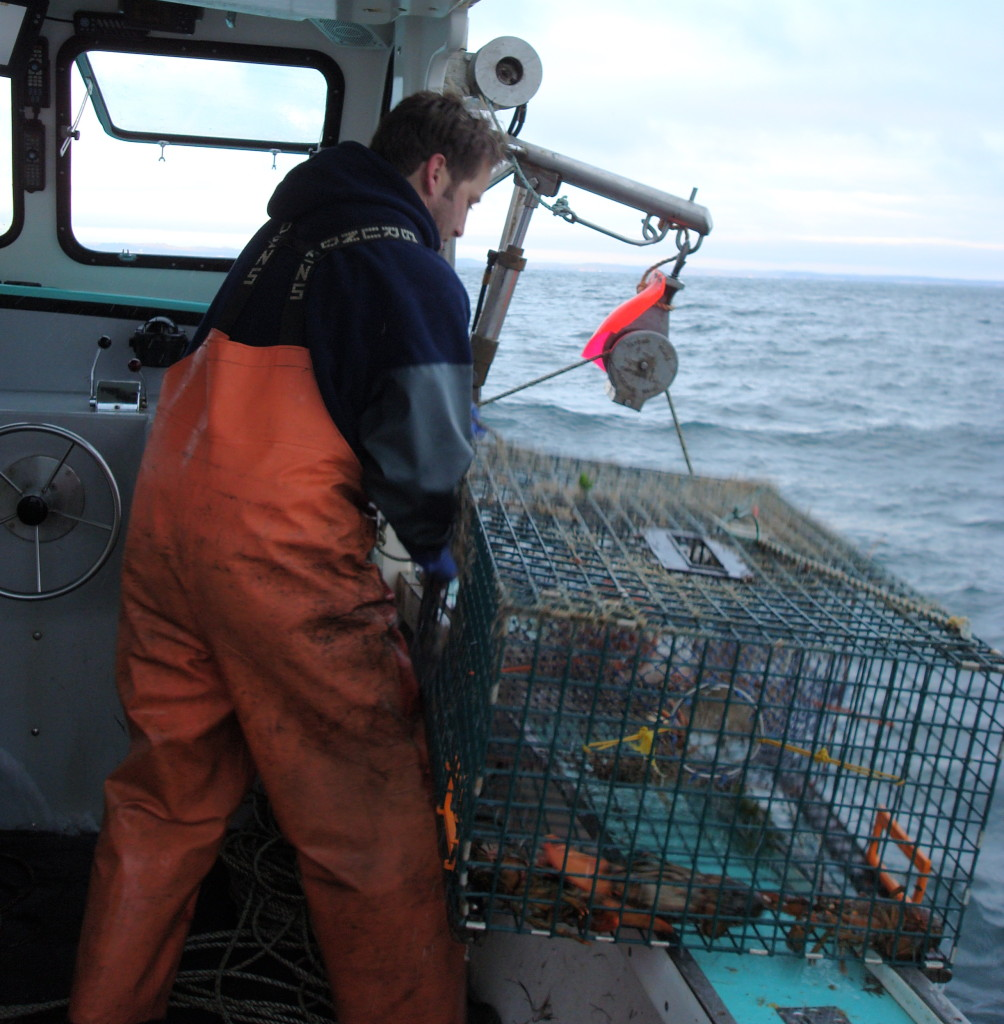 hauling trap obster fishing