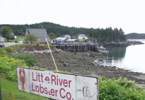 Lobster In Cutler Maine