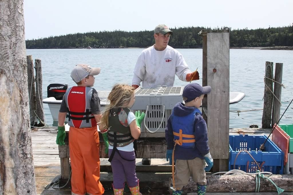 Buying Lobster Off Dock Maine